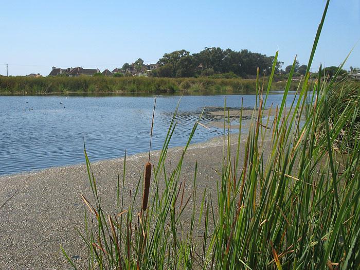 buena-vista-lagoon1