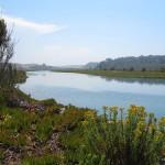 Los Peñasquitos Marsh Natural Preserve