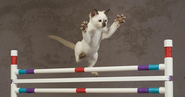 san-diego-cat-show