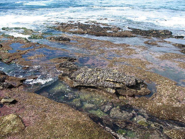 Shell Beach Tide Pools
